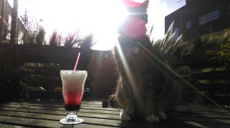 cocktail_and_cat7