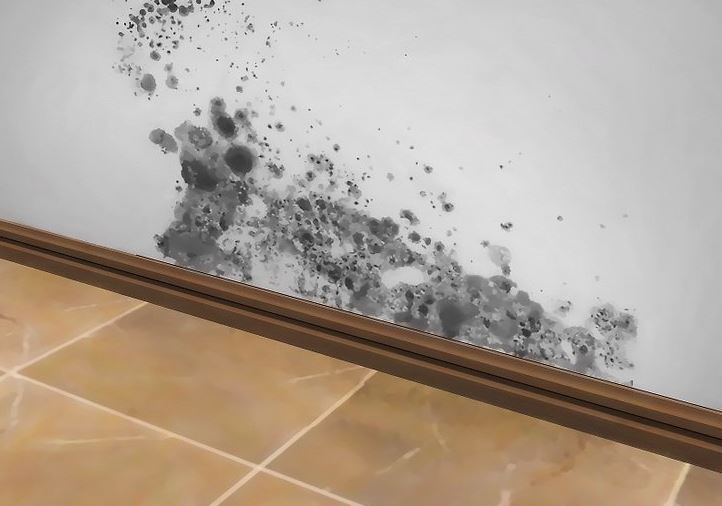 Cleaning And Killing Black Mold With Common Non Toxic Household Products Janitorial Services