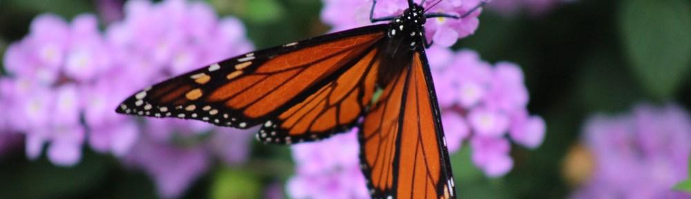 Mariposa Monarca en México
