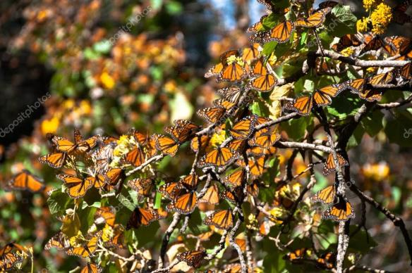 Santuario de la Mariposa Monarca