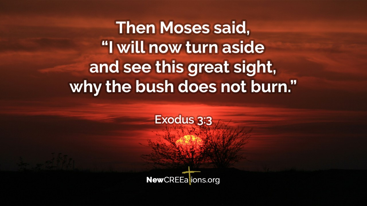 Notice Divine Appointments - Exodus 3:3 - NewCREEations