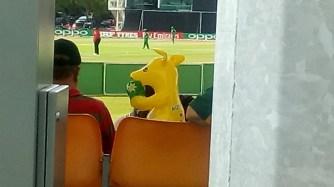 An Australia fan