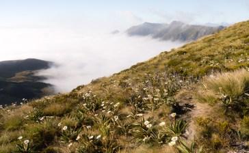 The Kepler Track - Fiordland