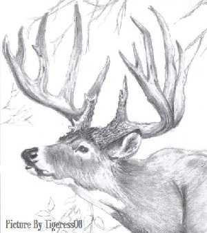 The White tail deer is the state animal of Ohio. The drawing of a white tail deer featured on the Ohio Dispensaries website is a clickable link to the nwf.org, or National Wildlife Federation