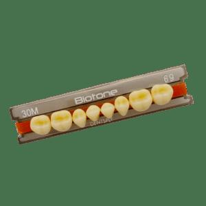 Dente Biotone 30L Superior 66 - Dentsply