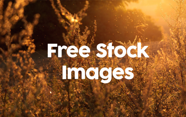 Free Clip Art Graphic Design Free Stock Photography Stock Photo File Page 13