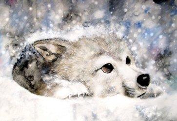 wolf snow wolves cute baby yorkshire rose icon cs wolfs animals deviantart hd google winter grasscloth fanpop friends simple christmas