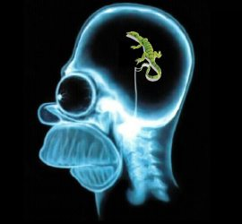X-ray of a skull showing a lizard