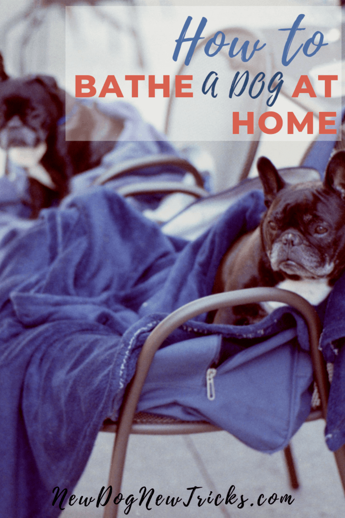 How to Bathe a Dog at Home P3