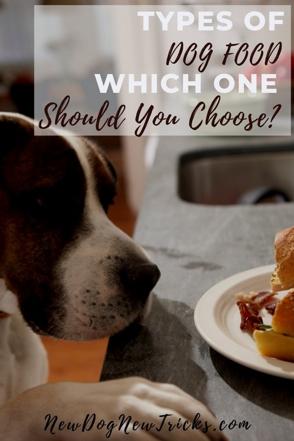 Types of Dog Food - Which One should You Choose_ P3