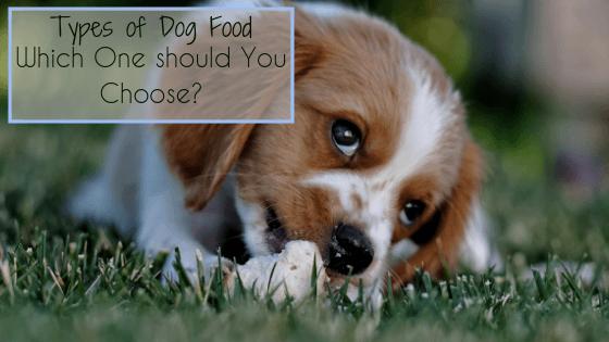 Types of Dog Food - Which One should You Choose