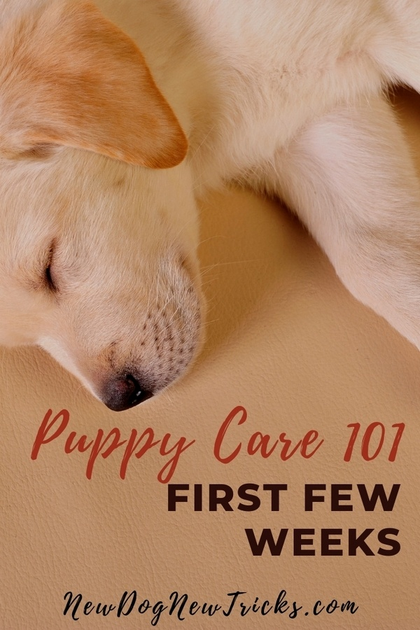 Puppy Care 101 - First Few Weeks P3