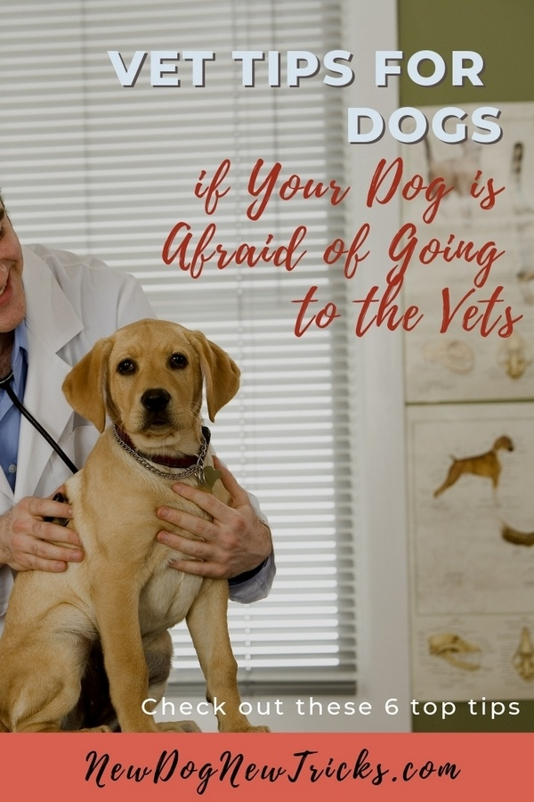 Vet Tips for Dogs if Your Dog is Afraid of Going to the Vets P1