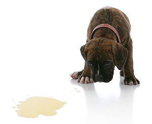 potty-training-puppy