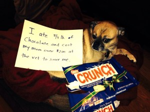 dog ate candy