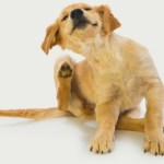 Keeping Your Dog Flea Free