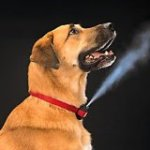 Review: Citronella Spray Bark Collars; Are They Worth It?