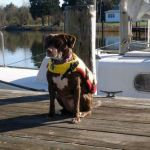 Safe Summer Fun; Life Jackets for Dogs