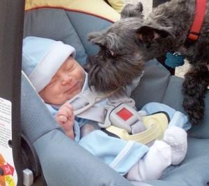 dog_meeting_baby