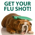 Can Dogs Catch a Cold or The Flu