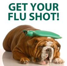 Can dogs catch a cold-flu