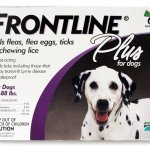 Picking the Right Flea Medicine For Your Dog