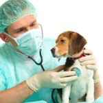 Dealing With Dog Diseases