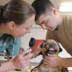 Doggie Dialogue: Making Vet Visits More Manageable