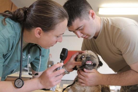 viisiting the veterinarian