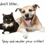 Reasons to Spay or Neuter Your Dog