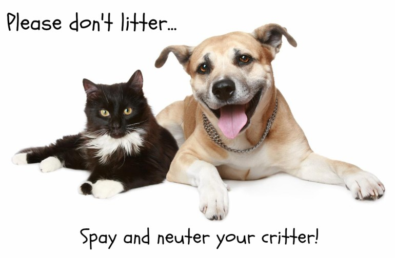 Spay or Neuter Your Dog