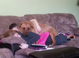 Rosco loving on my wife and son watching TV.