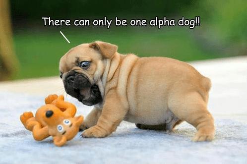 alpha dog1