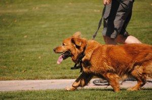 man-walking-dog