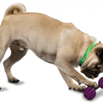 6 Reasons Your Dog Needs an Interactive Dog Toy