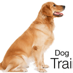 Dog Training: The Single Most Important Element