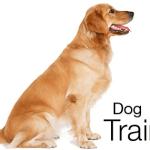 Dog Training: The Single Most Important Element