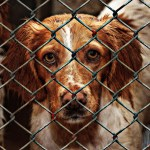 6 Reasons to be a Foster Parent to a Homeless Dog