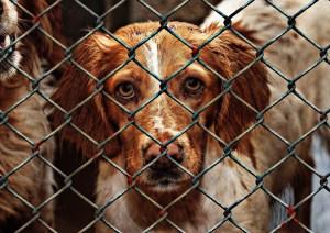 animal-welfare-1116205_960_720