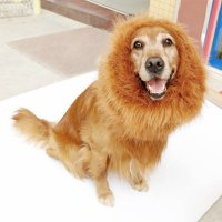 Last Minute Halloween Costumes for your Dog | New Dog Owners