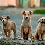 7 Commands Every Dog Must Know