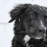 Preparing Your Dog For Winter
