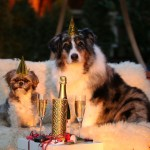 New Year's Resolutions for You and Your Dog in 2017
