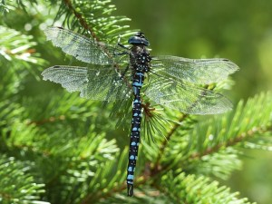 Dragonfly Empowerment