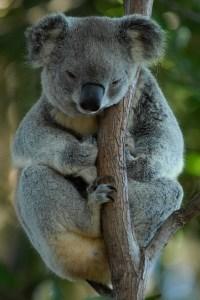 Koala Empowerment