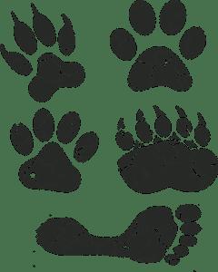 Power Animal Reiki
