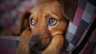 Healing Pet Anxiety Reiki