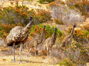 Emu Empowerment