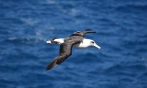Journey of the Albatross
