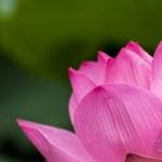 Lotus Energy Lightwork Reiki